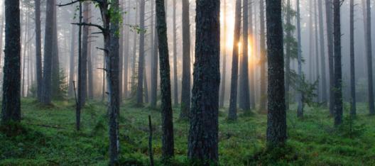 Estonian forest